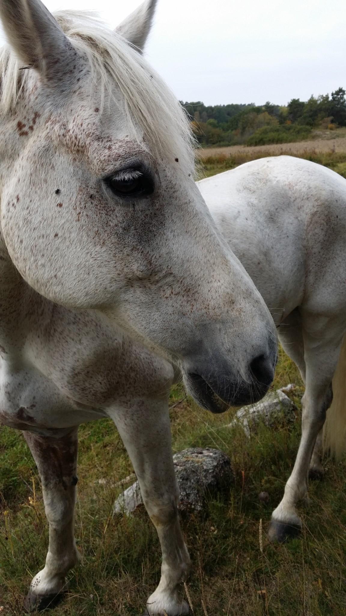 Yrke - häst