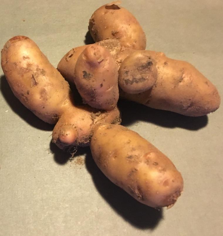 potatis 3